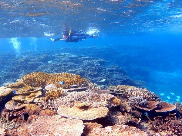 みれば納得、大神島の圧巻のサンゴ礁!
