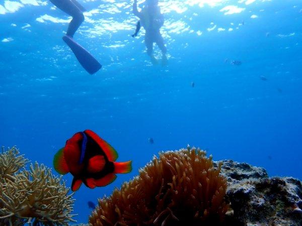 お魚とサンゴが一杯!人気のクマノミにも会える「ゴリラチョップ」で手軽に沖縄の海をシュノーケリングで満喫!