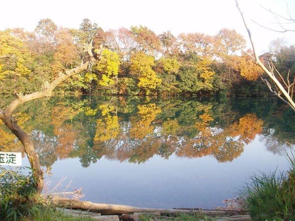 秋には美しい紅葉