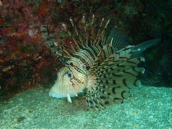 いろんな種類の魚たちと出会える黄金崎の海