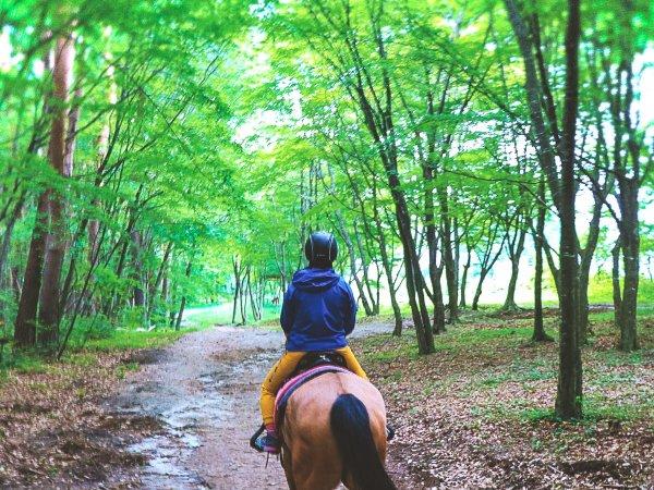 馬と一緒に過ごす癒しのひととき