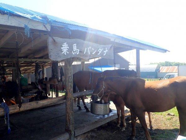 北日本乗馬サービス バンダナ