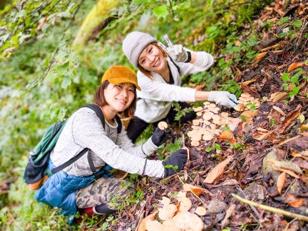 小谷 山菜狩り・きのこ狩り・山岳果実ハイキング