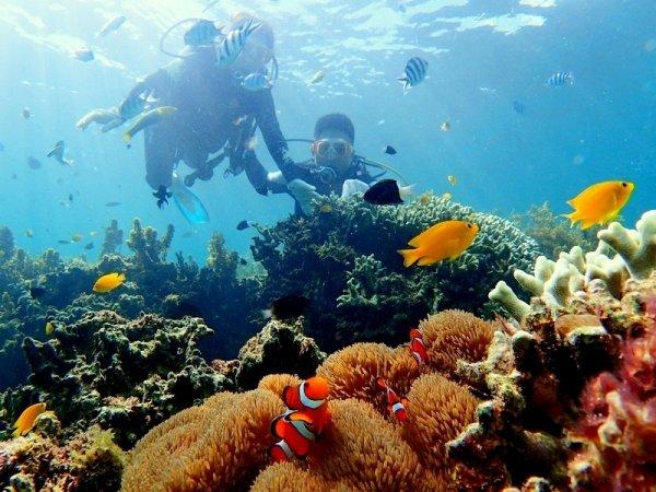 沖縄本島 ダイビング