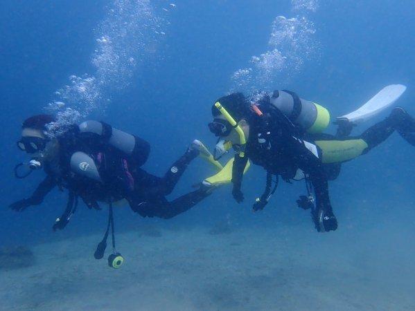 西伊豆 体験ダイビング