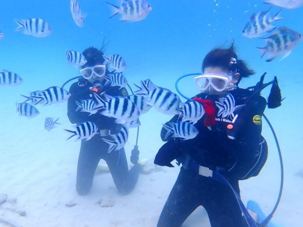 沖縄本島(本部) 体験ダイビング