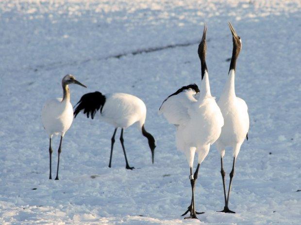 釧路湿原 自然観察・動物観察