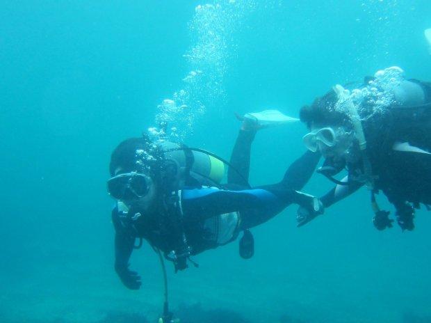 伊豆 体験ダイビング