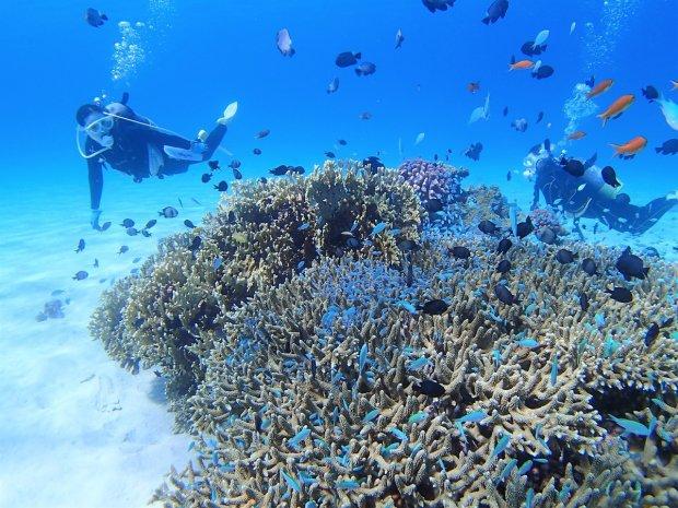 阿嘉島 体験ダイビング