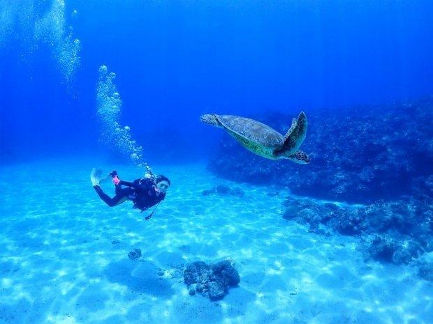 沖縄本島&慶良間諸島 体験ダイビング