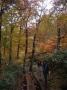 四季折々、表情を変える森の中をハイキング。秋にはブナやダケカンバの紅葉の中を歩きます。(尾瀬)
