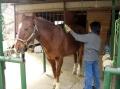 乗馬時間以外の馬とのコミュニケーションを楽しんで!◆「馬と過ごす1日」コース