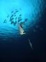 のんびりと群れて泳ぐ熱帯魚たち、美しいサンゴ礁、沖縄でも有数のダイビングポイントを満喫!!