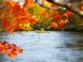 紅葉の時期もとてもキレイ!!