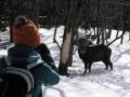 【フレペの滝スノーシューハイキング】森の中にひょっこり現れる野生動物との出会いも冬のツアーの魅力です。