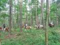 本格森林トレッキング!森に入れば馬の足音と鳥の声、八ヶ岳の大自然があります。
