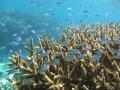 大きなリーフ(珊瑚礁)が広がる奄美北部の海は生きものが豊富!