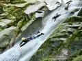 【天川コース】小1から参加OK!登りは水しぶきを上げてシャワークライミング、帰りは4つの天然スライダーを楽しみながら流れ下ります!
