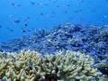 砂底の岩の塊やサンゴに集まる、色とりどりの魚たちを間近で見ることができます。(水納島)
