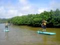 億首川に広がるマングローブ
