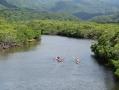 日本最大級の広大なマングローブ林