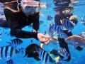 【青の洞窟:真栄田エリア】 沖縄本島人気No.1のポイント「青の洞窟」でシュノーケリング!