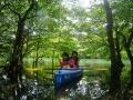 スケールの大きなマングローブの森