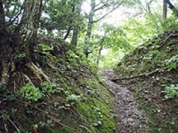 芦生・比良山系 トレッキングツアー