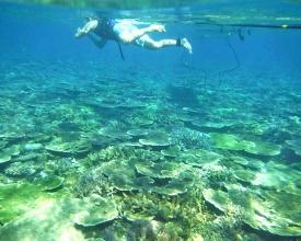 SUPクルージングだけでなく、珊瑚の海も楽しめる!
