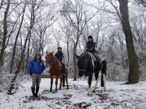 年間を通じて楽しめる!人間に対して非常に懐っこい馬たちばかりです