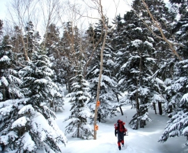 樹林帯では冬も逞しく生きる動物や動物の足跡が見れるかも!(※芦生の森スノーハイクコース)