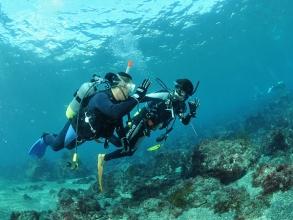 伊豆半島の中でも特に水がきれいで生物の豊富な八幡野の海