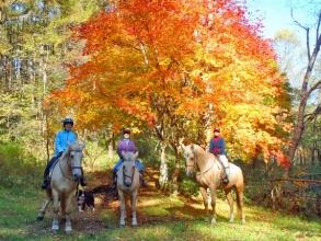 四季折々。秋の真っ赤な紅葉を楽しめます。