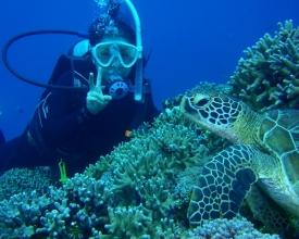 【ウミガメと泳ぐ、非日常体験も!】美しい「ケラマブルー」の海で、体験ダイビング&シュノーケリング。
