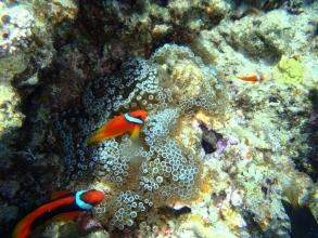 ときには美しい熱帯魚がみられることも!