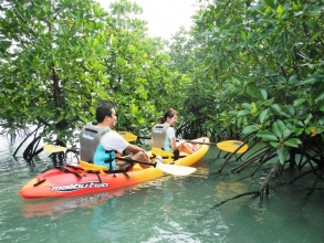 水辺の自然や生きもの、マングローブの不思議な根っこ…カヤックなら間近で観察することができます!