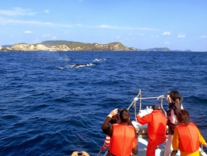 陸上でクジラを見つけてから直接現地へ向かいます!