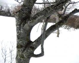 幹がオレンジ色のダケカンバや、独特の樹形のブナの林など下界では見ることのできない感動がいっぱい!