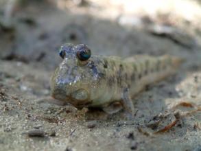 沖縄中部を流れる【比謝川】は生き物の姿も多く見られる街のオアシス