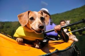 愛犬もカヤック犬デビュー! ワンちゃんのサイズに合わせたライフジャケットをご用意しています。