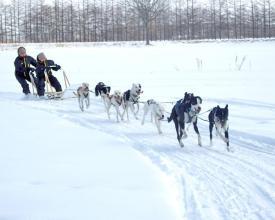 犬ぞりを操縦するマッシャー(犬ぞり使い)はあなた自身。犬たちが走り易いようにサポートするのがマッシャーの役目!