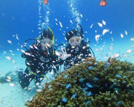 美しいサンゴ礁や色鮮やかな熱帯魚がたくさん!眺めていると、時間が経つのを忘れてしまうはず…。