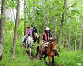 北海道の自然を活かしたワイルドな乗馬が楽しめる!