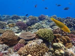 沖縄の海の生きものたちを担当ガイドがしっかりご案内!触れる生きものは実際に触ったり、近くで観察したりしながら楽しめます。