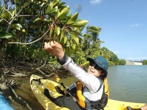 動植物にも精通したガイドがマングローブの林をご案内!触れる生きものは実際に触ってみたり、近くで観察しながら楽しんでいただけますよ。