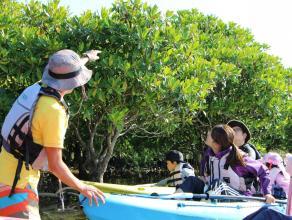 本島最多4種類のマングローブが見られる!