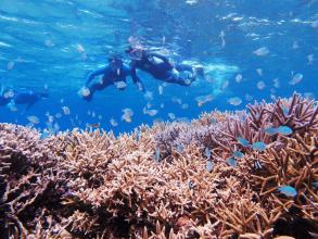 【サンゴの森】ビーチシュノーケリング!安心のビーチエントリーで、インリーフに住む豊かな生きものたちを楽しみます!