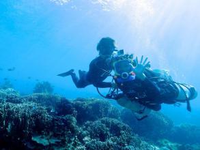宮古島(伊良部島エリア)体験ダイビング