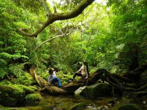 熱帯雨林のジャングルをトレッキング